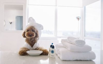 5 Benefits of Dog Grooming at Ooh La La Posh Pets