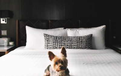 6 of the Poshest Doggy Hotels in the World
